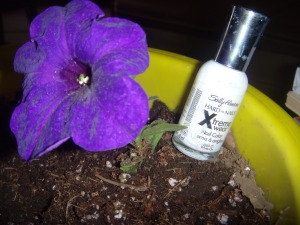 Foto de la botella con planta.